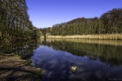 Zillertal Bochum (dargun) Tags: nature water landscape deutschland wasser sommer natur bach blau bochum landschaft baum zillertal