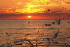 Splas... (BarbaraBonanno BNNRRB) Tags: splas water acqua sea scogliera sunset scoglieradellamore c dellamore bnnrrb