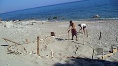 -  (Giorgos Sourtis) Tags: caretta ikaria   carettacaretta seaturtle  beach syrtiko aegean greece august volunteers