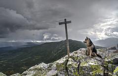 King of the hill (jimmy Johansen) Tags: dog malamute skies mountain himingen norway norge rain view norwegian