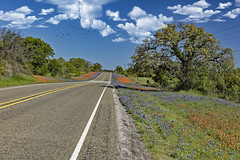 Road of flowers 1 (Largeguy1) Tags: approved road flowers landscape bluesky clouds nature birds canon 5dsr