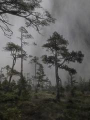 alpine solitude (wintercove) Tags: trees fog alpine iphone alaska multipleexposure