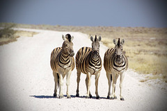 Foto Namibia - Viaggio guidato in Namibia ad Ottobre