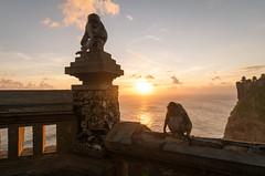 Sunset Uluwatu Temple, Bali, Indonesia (Maria_Globetrotter) Tags: 2016 fujifilm indonesia mariaglobetrotter dscf3567 sunset monkey monkeys