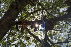 Hanging around (Daz Smith) Tags: dazsmith canon6d city streetphotography citylife thecity urban streets uk tree leaves branches trainers shoes shoelace hanging sun shine bristol sunny lightflare green bark red