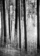 ATSH - Wood (lclower19) Tags: atsh wood black white bw monochrome trees icm intentionalcameramovement horn pond movement odt