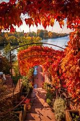 Am Wehrgang im Schlossgarten Aschaffenburg (mrocek) Tags: 2015 aschaffenburg bayern deutschland herbst schlossgarten wein bunt gelb rot wasser ufer unterfranken main mainufer panoramio7769543125218689