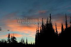 00159448 (wolfgangkaehler) Tags: 2016 northamerica northamerican usa unitedstates unitedstatesofamerica washingtonstate mtrainier mtrainierwa mountrainier mountrainierwa nationalpark mtrainiernationalpark landscape scenery scenic firstlight sunrise sunrises trees silhouetted silhouettes orangecolor sky