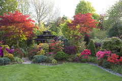 Upper garden in late spring (Four Seasons Garden) Tags: four seasons garden uk england west midlands walsall spring 2016 japanese maples acers leaves azalea flowers ornamental conifers colour