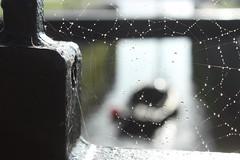 Shine (mcginley2012) Tags: cobweb waterdrops shine macro nature boat web pattern eglintoncanal closeup remnant