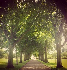 (lucycooper4) Tags: kent whitstable trees nature