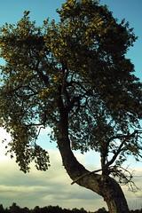 October (Simy_Orifici) Tags: pianta albero cielo sky himmel autunno autumn october oktober ottobre