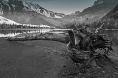 Un endroit merveilleux (Valentin le luron) Tags: 20161021 nikon 800 e derborence valais romandie suisse paysage nature montagne lac arbre noirblanc yves paudex lausanne