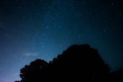 Frontière de la terre et le ciel (alexwinger) Tags: noir arbre tree night light midnight nikon stars