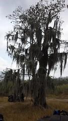 20150228_123811 (rolyrol1982) Tags: mossy oak clewiston florida