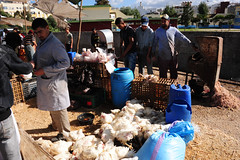 Poultry - live to dressed on the spot (D70) Tags: chickens market live morocco poultry killed strangled dressed tangier hens plucked