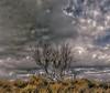 Stunted tree (1) (shumpei_sano_exp4) Tags: bay shell dorset cloudscape t189 abigfave diamondclassphotographer goldstaraward dragongoldaward