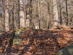 NEOC: Orienteering - Blue Hills West (Tim Booth) Tags: usa massachusetts orienteering milton neoc houghtonpond