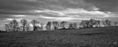 arbres et brume (cham_) Tags: supertakumar35mmf35