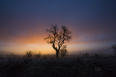 Magic Sunrise (Zac) Tags: pink blue sky mist tree colors sunrise landscape arbol magic bluesky paisaje amanecer pinksky arbre niebla paisatge thelook boira sunrising magiccolors albada platinumpeaceaward infinitexposure