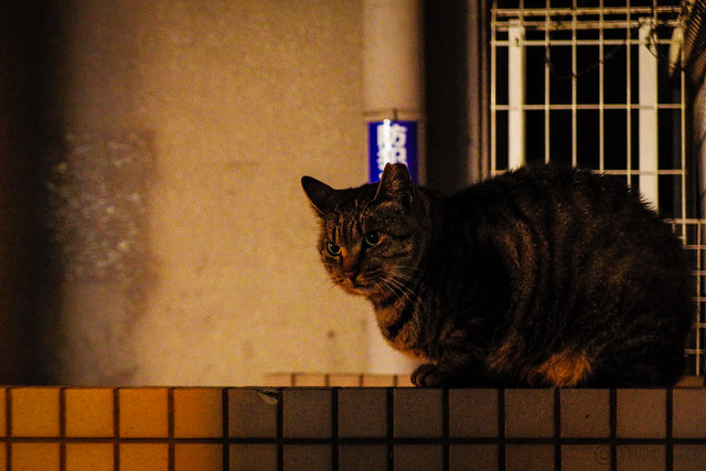 Today's Cat@2015-01-29