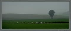 Czech Land (cienne45) Tags: carlonatale cienne45 natale italy czechland landscape czechrepublic land campagnaceca greatphotographers artonflickr praga praha prague