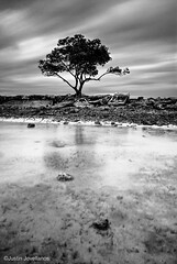 Solitary Tree (Justin Jovellanos) Tags: longexposure travel blackandwhite beach monochrome landscape mono seascapes philippines sandbar batangas calatagan clearwater shoal solitarytree motions nd400 sigma1770 nikond80 shallowwaters exploringtheworld seascapephotography burotbeach
