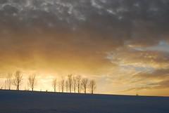 letztes Licht (Uli He - Fotofee) Tags: licht nikon himmel bume uli ulrike rhn himmlisch abendlicht milseburg demut fotofee ulrikehe meinerhn ulihe hessenhessischerhn umdiemilseburg