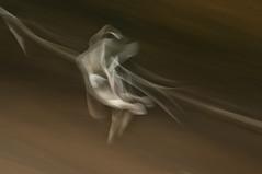 SEAGULL STUDY 124 (annemcgr) Tags: seagulls birds gulls flight icm fineartphotography slowmotion intentionalcameramovement annemcgrath