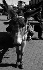 15022015-P1170645 (Philgo61) Tags: africa lumix vacances market panasonic morocco maroc marrakech souk xxx souks marché vacance afrique médina gf1