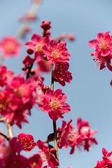 DS7_9831.jpg (d3_plus) Tags: street sky plant flower nature japan walking tokyo outdoor fine daily bloom    tamron   dailyphoto  kawasaki thesedays  fineday   tamron28300mm tamronaf28300mmf3563  a061   d700  tamronaf28300mmf3563xrdildasphericalif  nikond700 tamronaf28300mmf3563xrdildasphericalifmacro tamronaf28300mmf3563xrdild a061n