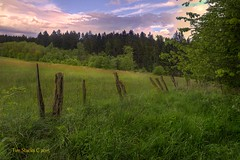 FENCES, MEADOWS AND FOREST (MERLIN08, 2MViews) Tags: forest fence germany landscape hessen meadows kassel habichtwald