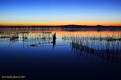 esa hora mgica del atardecer (tonomf) Tags: valencia azul lago agua nikon aves cielo laguna redes albufera horaazul horadorada nikond5100