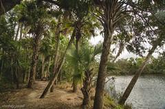 Prima Vista (the kelp knot) Tags: island florida hiking palmtrees riverpark oldflorida primavista portsaintlucie walkingmomma