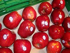 Wann werd ich dein Abendmahl (amras_de) Tags: apfel pommier malus äpfel obelis sierappel õunapuu omenapuut jablon apelsläktet æbleslægten pomarbo çiçekelmasi