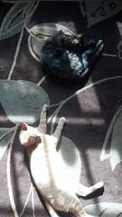 IMG_20140215_111316_766 (smurfn5) Tags: cat kitten charlie nibbler rottenkitten