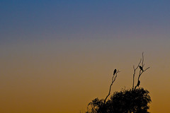 Afternoon gradients (PhilliB123) Tags: trees sunset birds silhouette canon coast south minimal nsw 70300mm tamron t3i gerroa 600d