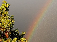 Colourful Rainbow (ikan1711) Tags: trees sky rain hail outdoors gold rainbow skies colours rainyday raindrops colourful treebranches beautifulnature wonderfulnature rainbowcolours treesilhouettes rainyskies beautifulrainbow treesinrain goldenbranches