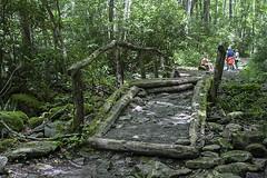 Forgotten Bridge (LarryHB) Tags: bridge summer flower tree nature horizontal landscape photography nationalpark hiking path tennessee trail 2016