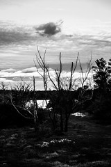 (martinnarrua) Tags: nikon nikond3100 argentina amateur entre ros concepcin del uruguay clouds cloudy nubes nublado rbol rboles tree trees nature naturaleza blanco negro black white bn bw byn monocromtico ro river