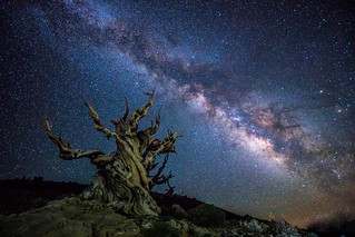 Sony A7RII Astro Photography Milkyway Ancient Bristlecone Pine Forest Dr. Elliot McGucken Fine Art Photography!  Subtle Light Painting!