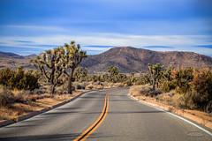IMG_1409 Joshua Tree (Alex Hsieh ()) Tags: california usa canon nationalpark desert joshuatree roadtrip 6d joshuatreenationalpark 2016 canonef24105mmf4lisusm canon6d
