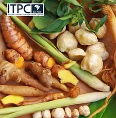 (itpcsopaulo) Tags: tradewithremarkableindonesia gengibre java medicinabotnica cientfico indstria farmacutica pesquisamdica indonsia crcuma aafro culinria curry indonsios especiarias mercadointernacional temperos