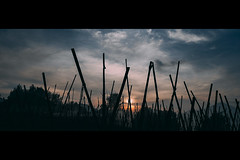 freeDom (r_if) Tags: blue silhouette torn lumix1232mm lumixgm5