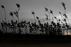 South wind (I.M.W.) Tags: ocean sunset sea sky cloud beach silhouette coast indianocean shore bangladesh coxsbazar