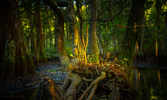 Magic at Sunrise (JDS Fine Art & Fashion Photography) Tags: sunrise nature lake water beauty light magic magicallight trees
