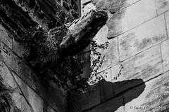 La gargouille et son ombre, cathdrale de Gisors - gisors-6729 (Pierre Fauquemberg) Tags: pierrefauquemberg photographie eure gisors mdival photographe photographeconflans conflansphotographe cathdrale glise religion religieux gargouille ombre blackandwhite noiretblanc monochrome blackandwhitephotography normandie tourisme normandietourisme enormandie