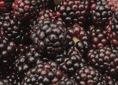 [Explore] Blackberries (cheesy42) Tags: scavenger7 blackberries berries beeren brombeeren closeup nahaufnahme explore explored