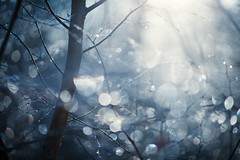 Marc Elliott Auction Image (Matthew Dartford) Tags: sidelight eastanglia atmospheric autumn backlight backlit bark bloom bokeh bokehlicious branch branches breakinglight colorful colourful creepy dew dof forest frosty moist plant shallowfocus tree wet woodland woods