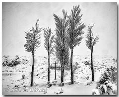 Records d'antigues batalles (Carpinet.) Tags: bocairent nieve lluvia neu historia monumento monument atmosfera nevando temporal frio recuerdos pasado